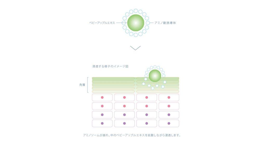インプレア デリバリー技術 アミノソーム 生体類似成分アミノ酸誘導体でできた0.1~0.4ミクロンのマイクロカプセル。美容成分を抱え込み、角層の「ケラチン」に効果的にアプローチするカプセルです。